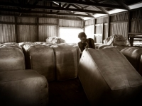 wool-bales-at-brenda-station-jpg